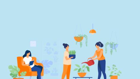 Plantas em apartamentos, como cuidar?